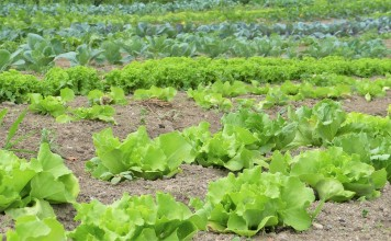I prodotti biologici in Italia tutti pazzi per il bio