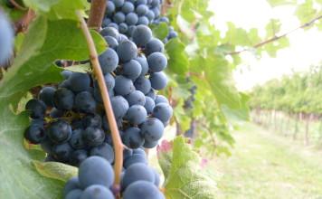 Sono vicini, alcuni fanno parte dell'Ue, le potenzialità di aprire il mercato enologico ci sono, è arrivato il momento di esportare vino nei Paesi emergenti dell'Est europeo