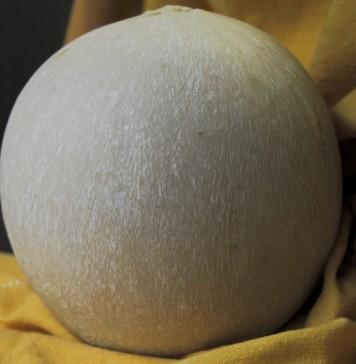 Pallone di Gravina prossima DOP